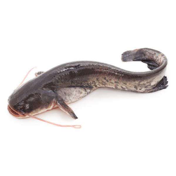 Fresh Catfish/Etta Koori
