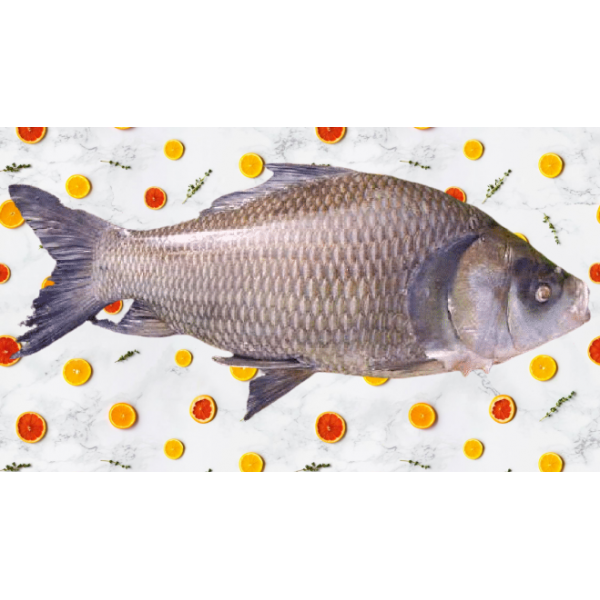 Fresh Catla Fish