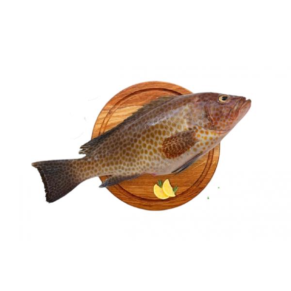 Fresh Reef Cod/Kalava