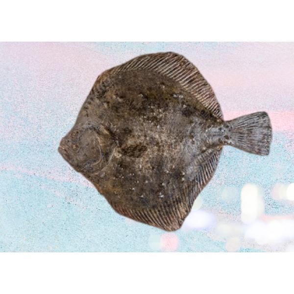 Flounder Fish Fillet Frozen
