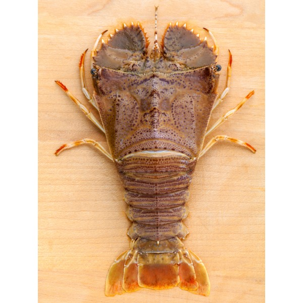 Sand Lobster / Slipper Lobster Frozen