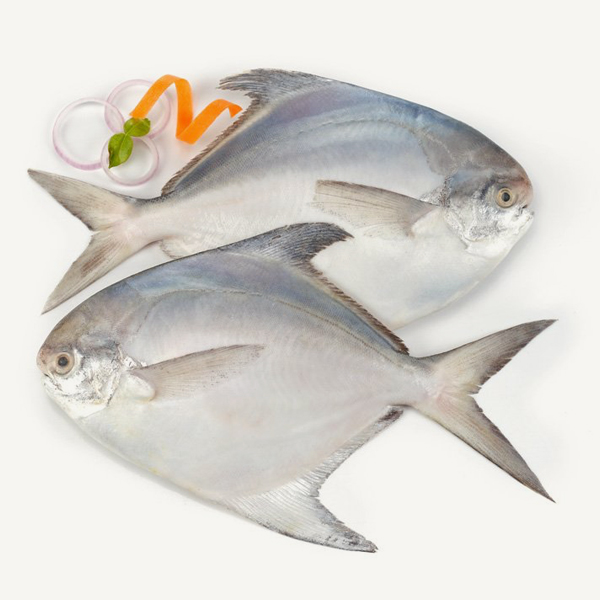 Fresh White Pomfret Sea catch
