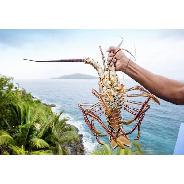 Caribbean Lobster Whole Frozen