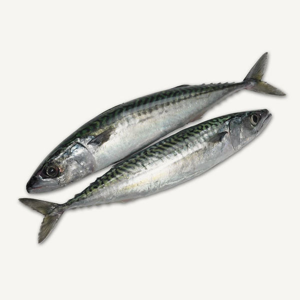 Mackerel Frozen