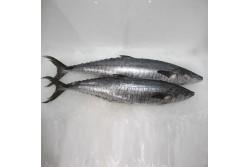 Fresh King Fish Whole - Per Kg