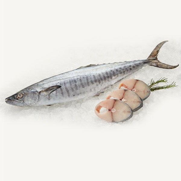 Fresh Wild King Fish /سمك الملك الطاز...