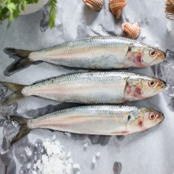 Sardine Whole Frozen
