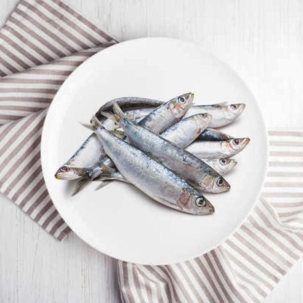 Fresh Premium Sardine  / السردين الطازج
