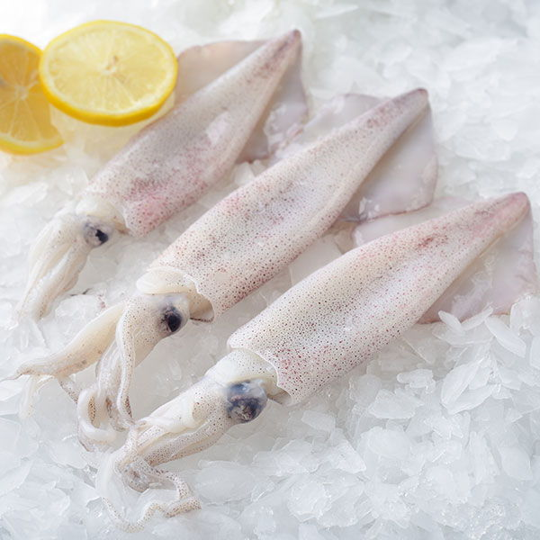 Squid Frozen