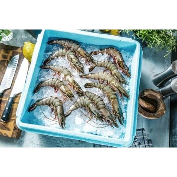 Tiger Shrimps Frozen