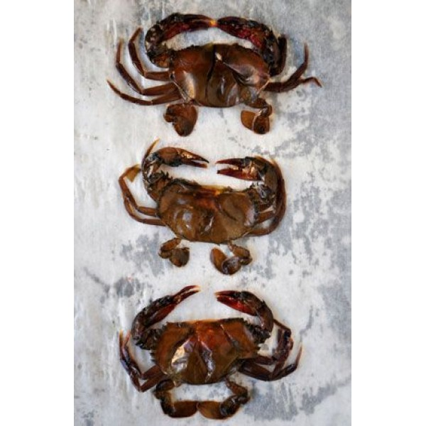 Soft Shell Crab Frozen